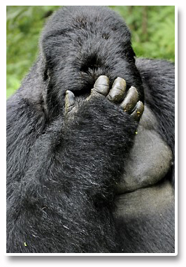 Forex_Kong_Disgusted